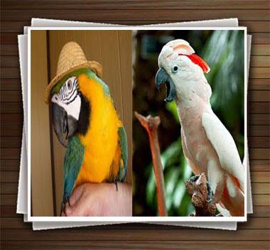 The-talking-parrot-photos-niceiran.ir-01